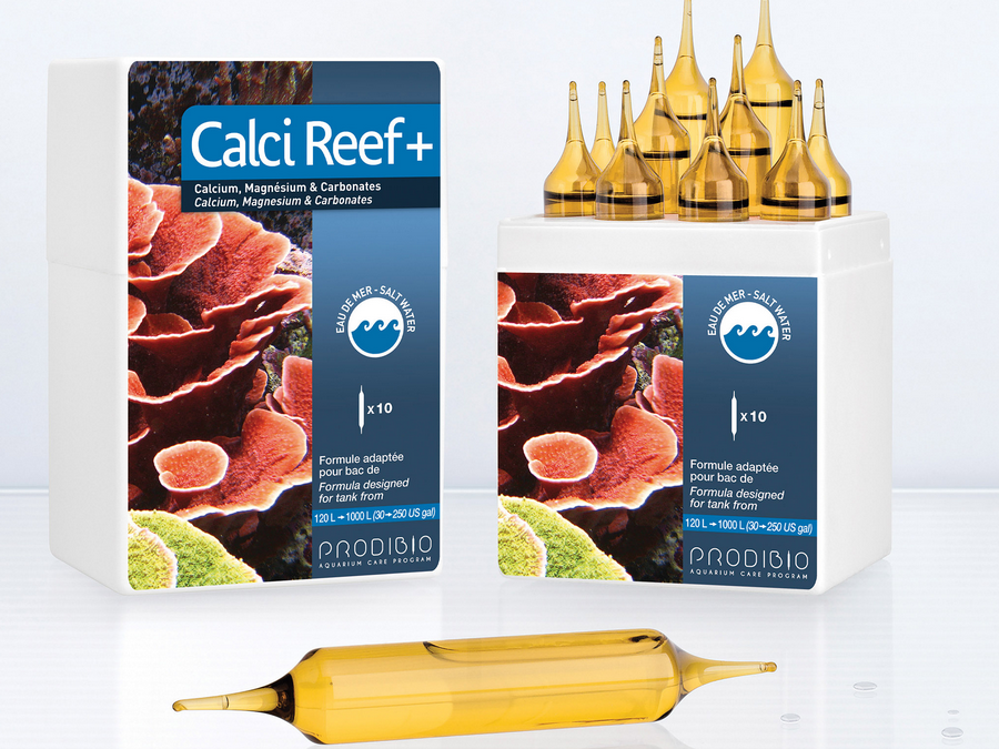 Calci_Reef +